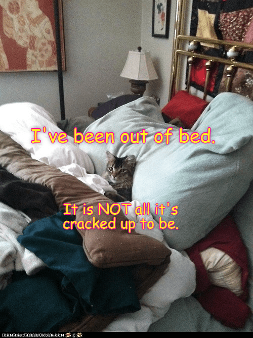 cat,out,bed,been,cracked up,not,caption