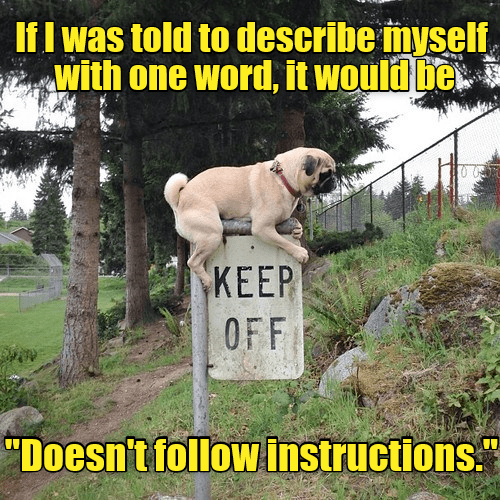 Meme of a dog sitting atop of a sign that says not to do it