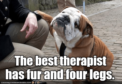 Dog meme about how dogs are the best therapists in a picture of a cute bulldog.