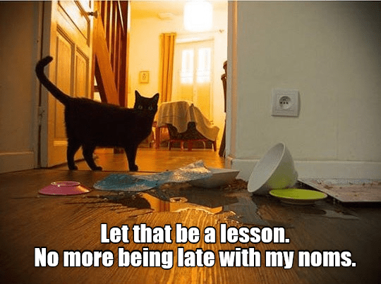 cat lesson noms caption late