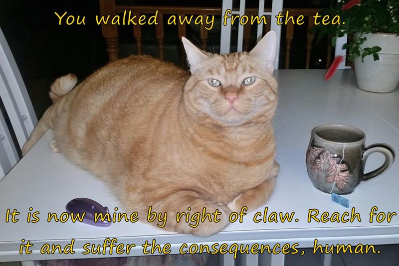claw cat right mine walked caption away