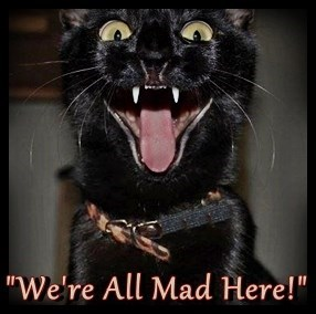 cat here mad caption all - 9025531648