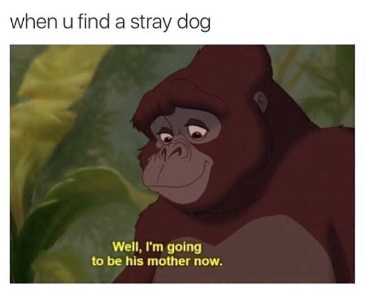 dogs Memes wholesome - 9025654784