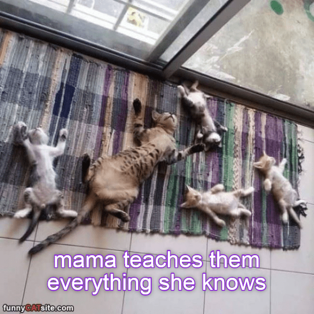 cat everything mama caption knows - 9025658624