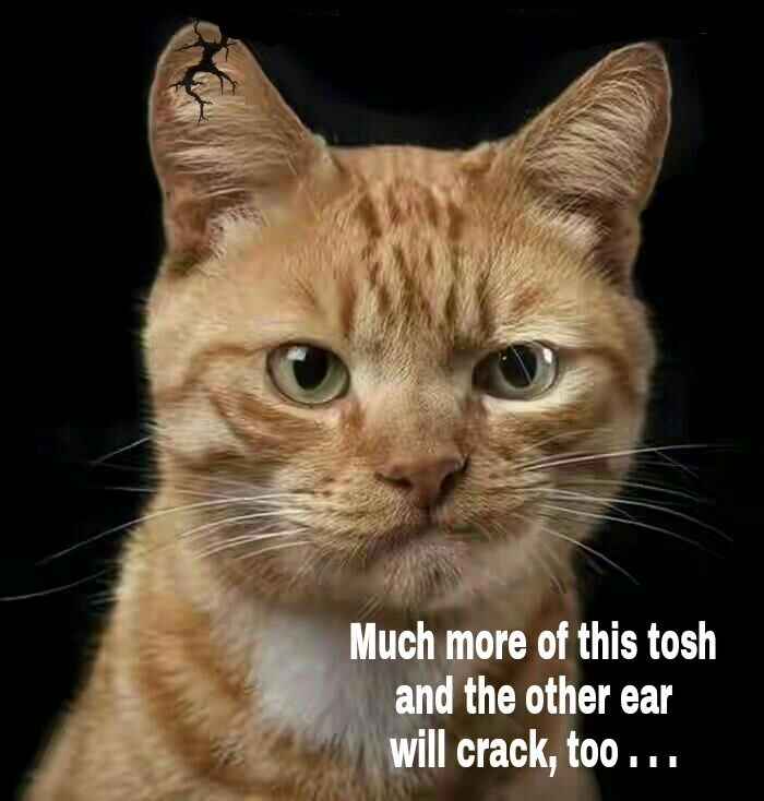 Cat meme about Brexit in which something is happening to the cat's ear.