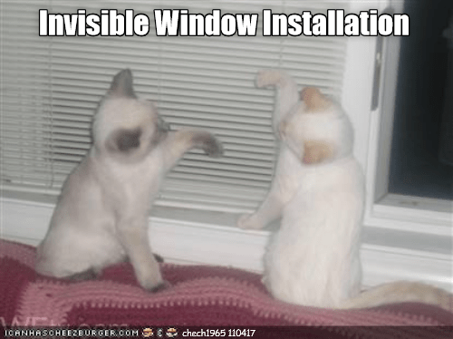 Invisible cat meme in which kittens appear to be installing a large pane of invisible glass.