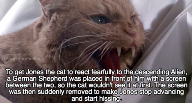 Whiskers - poppingremilins To get Jones the cat to react fearfully to the descending Alien, a German Shepherd was placed in front of him with a screen between the two, so the cat wouldn't see it at first. The screen was then suddenly removed to make Jones stop advancing and start hissing,