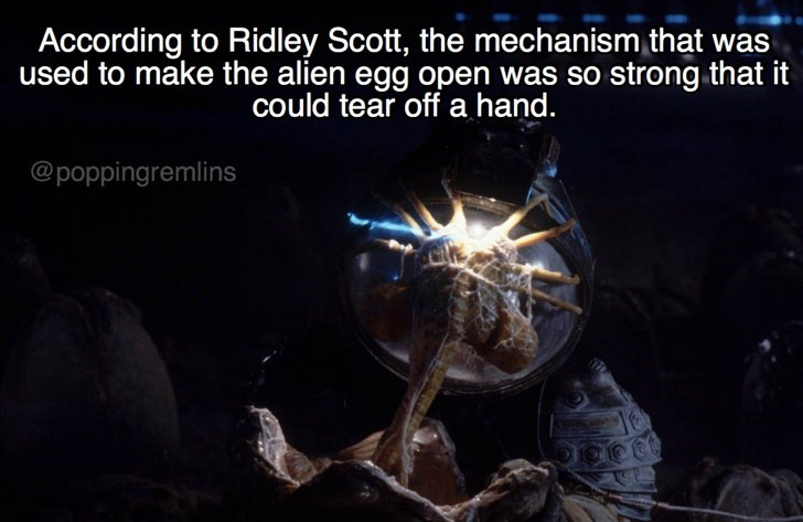 Organism - According to Ridley Scott, the mechanism that was used to make the alien egg open was so strong that it could tear off a hand. @poppingremlins