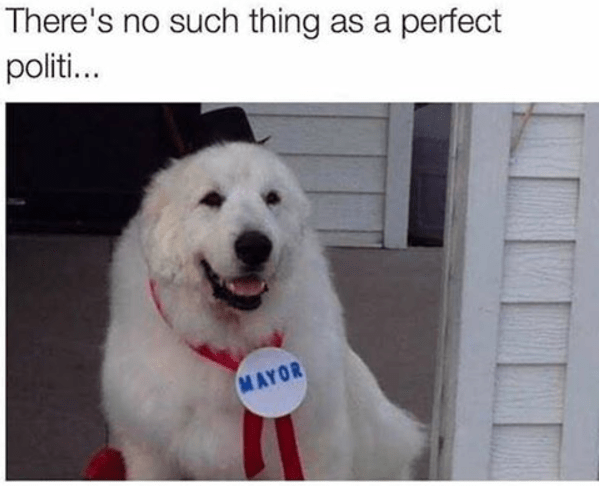 wholesome meme - Dog - There's no such thing as a perfect politi... MAYOR