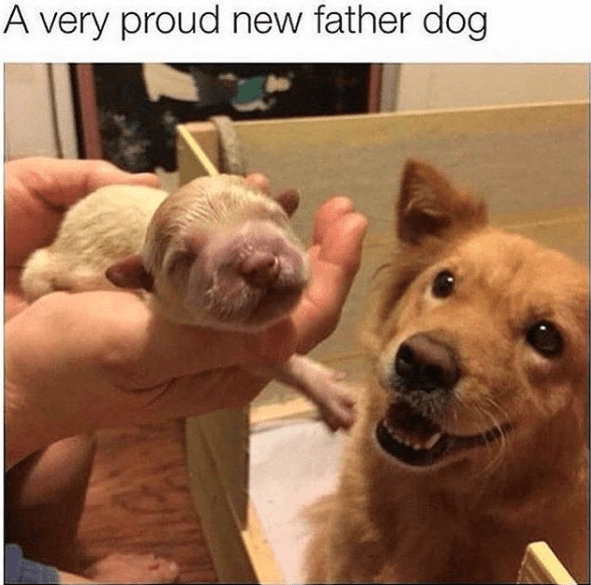 wholesome meme - Mammal - A very proud new father dog