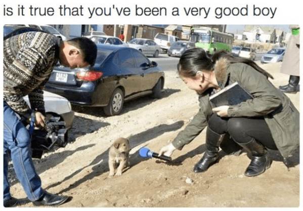wholesome meme - Canidae - is it true that you've been a very good boy