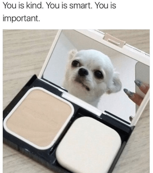 wholesome meme - Canidae - You is kind. You is smart. You is important.