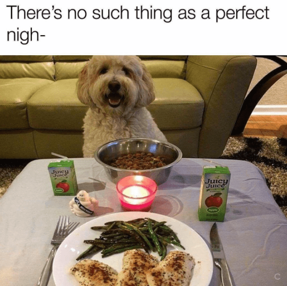 wholesome meme - Dog - There's no such thing as a perfect nigh- Juicy Juice Juicy Juice