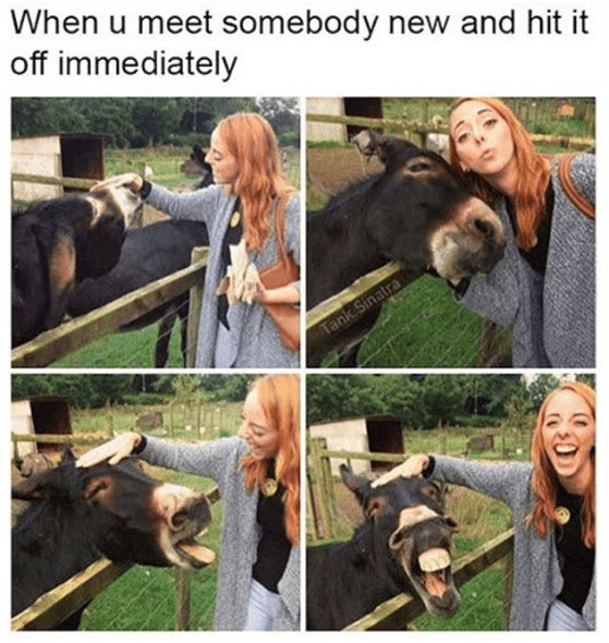 wholesome meme - Working animal - When u meet somebody new and hit it off immediately Tank Sinatra