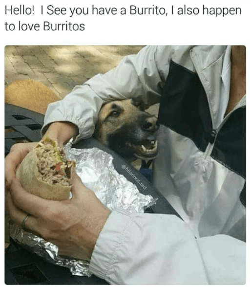 wholesome memes - Human - Hello! I See you have a Burrito, I also happen to love Burritos ehilarious.ted