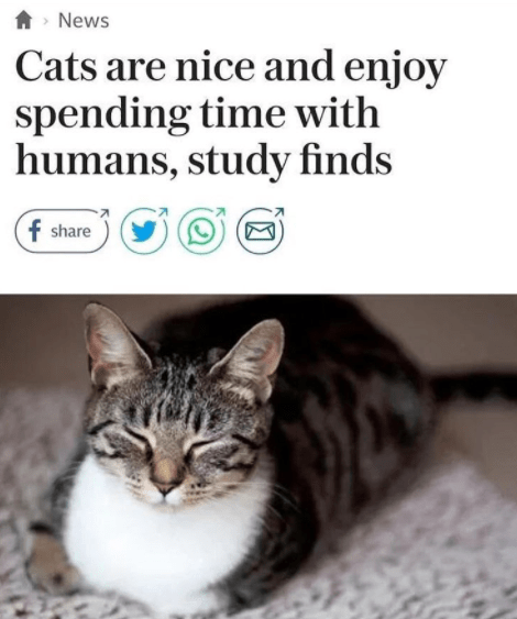 wholesome meme - Cat - News Cats are nice and enjoy spending time with humans, study finds f share