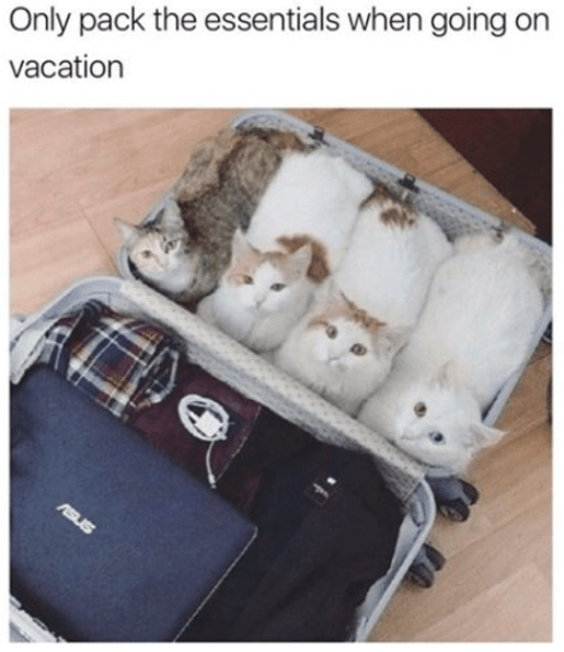 wholesome meme - Cat - Only pack the essentials when going a vacation resus
