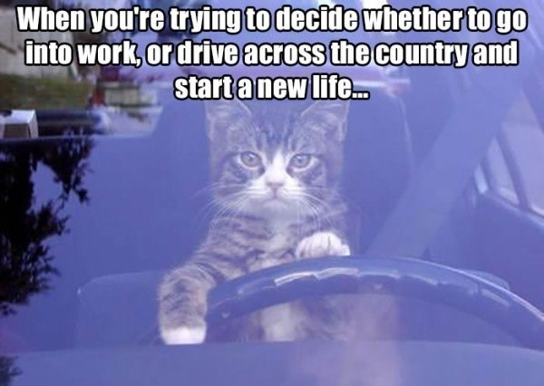 work meme about considering escaping the country with pic of cat driving a car