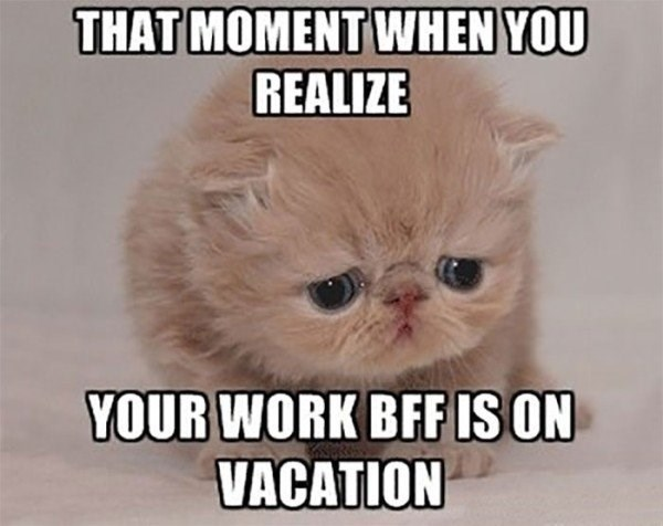 work meme about being lonely at work with pic of sad kitten