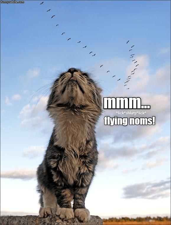 birds Cats funny cat memes - 9026233344