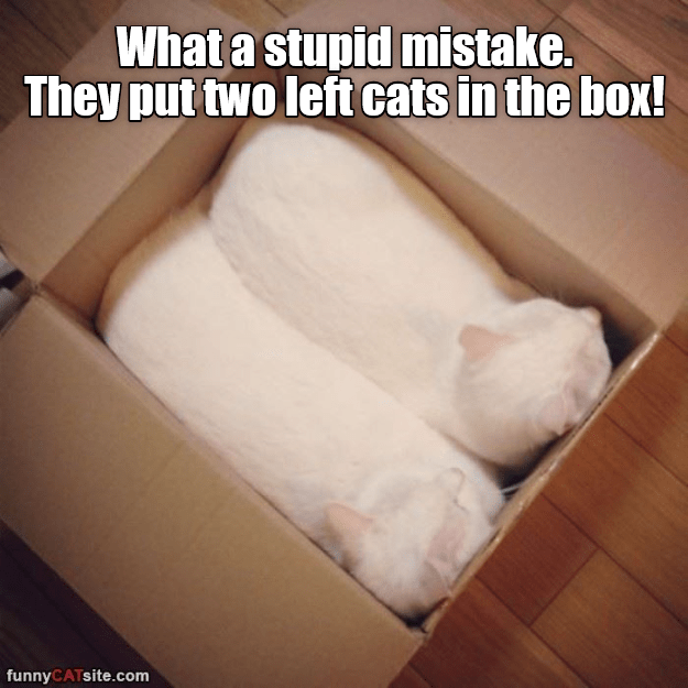 Funny cat meme of two white kittens snugly sleeping in a box with their heads turned left, and the caption says that they packed two left-cats by accidents, implying like they are shoes.