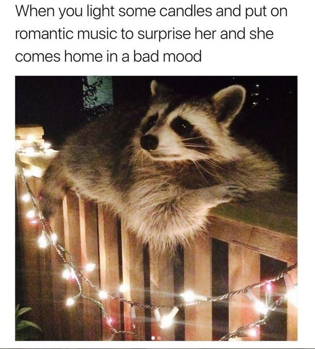 Memes raccoons animals - 9026243072