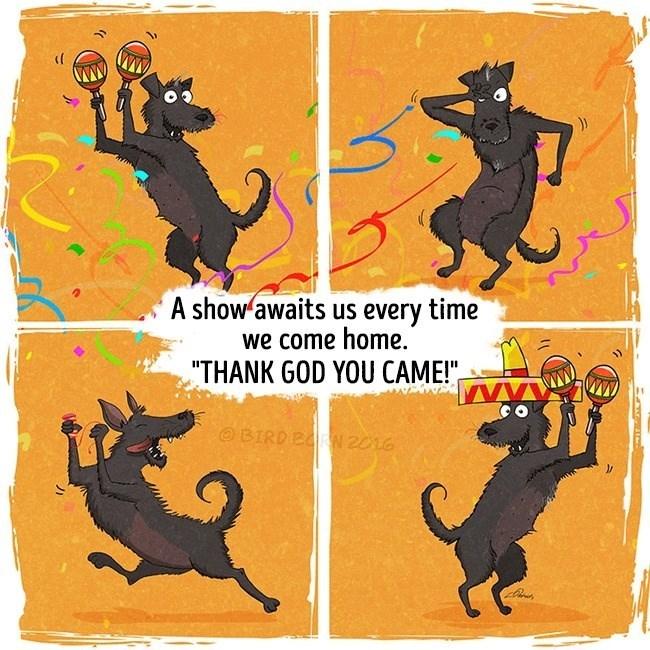 "Black cat - A show awaits us every time we come home. ""THANK GOD YOU CAME!"" OBIRD BRN 2016"