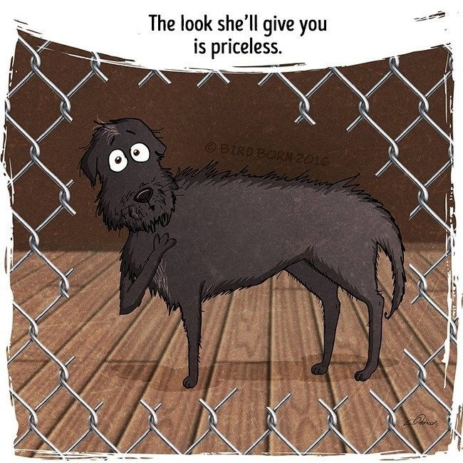 Dog - The look she'll give you is priceless. OBIRD BORN 2016 E