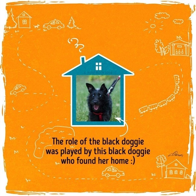 Dog breed - 田 區 2016 The role of the black doggie was played by this black doggie who found her home :) 田田田 ..