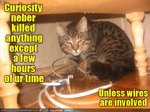 Cat meme about how curiosity doesn't kill much more than time, unless wires are involved.