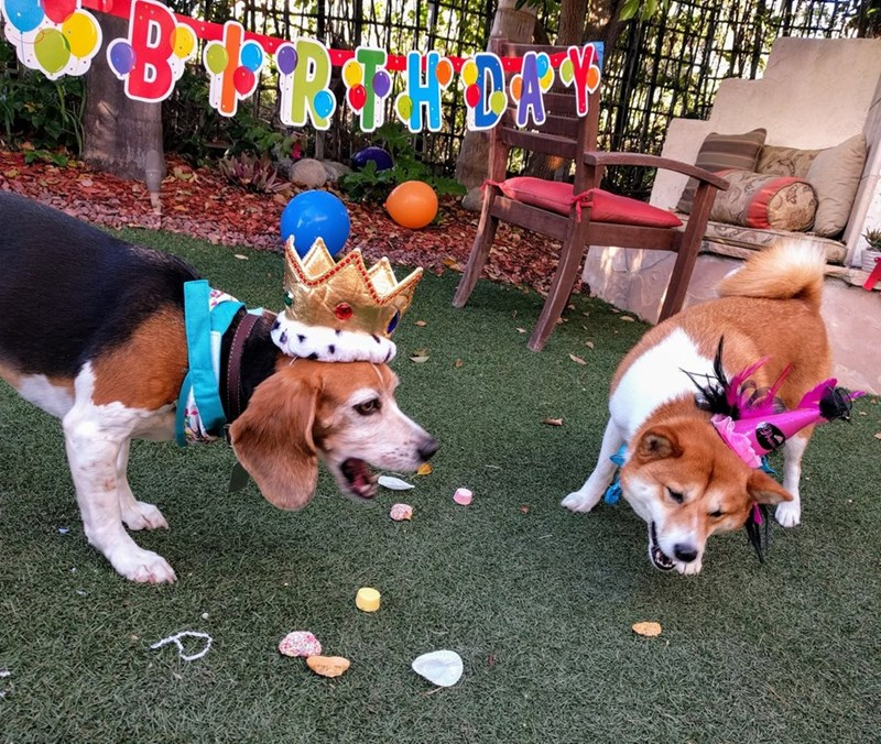 birthday party - Dog