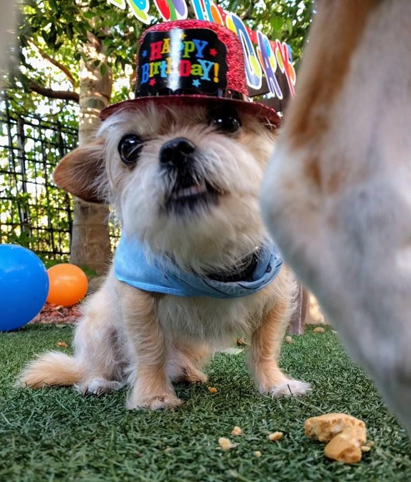 birthday party - Dog - H PY BIT DaY!