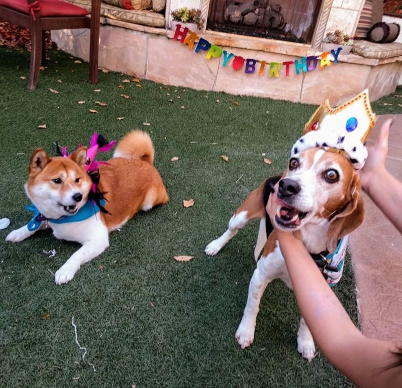 birthday party - Dog - HAPPYOBIRTHDY