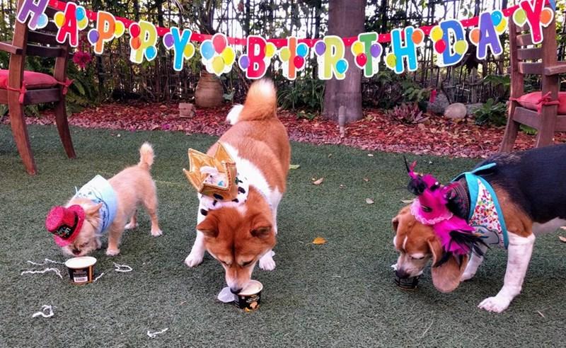 birthday party - Dog - AR2Y J8:239HA