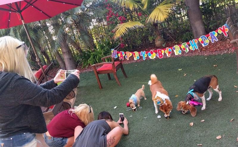 birthday party - Leisure
