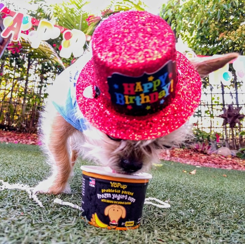 birthday party - Dog clothes - BIAPP YOPup problotio packed trozen yogurt cups Wth banana and peud b
