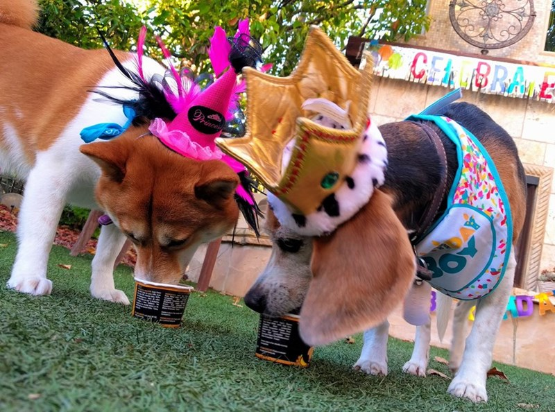 birthday party - Dog - CEABRA rince