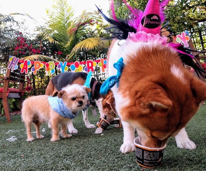 birthday party - Dog - Princes