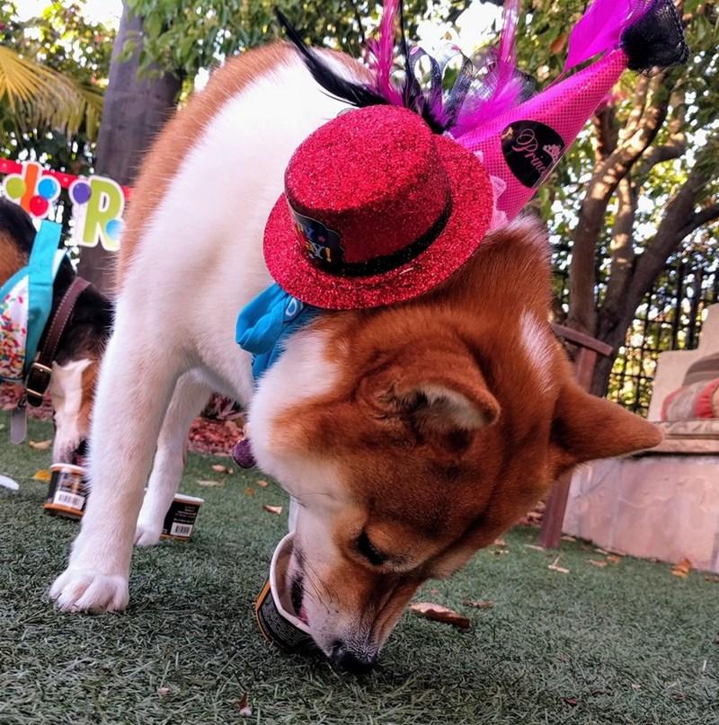 birthday party - Dog - princ