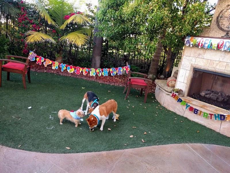 birthday party - Dog - HAPRYOBRGHDAY BIRTHD