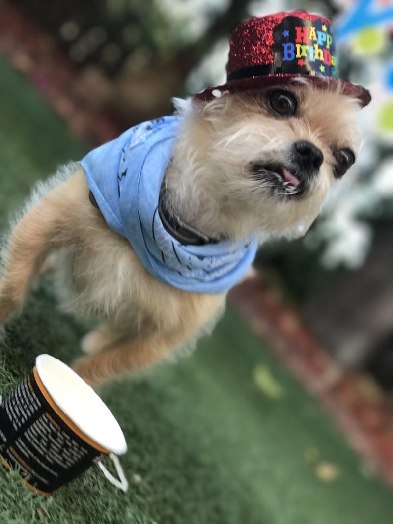 birthday party - Dog - HAPP BRh