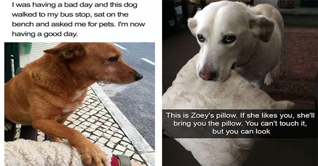 good boy girls dogs