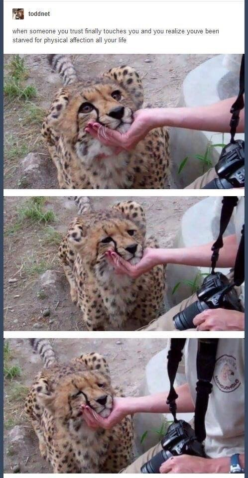 Terrestrial animal - toddnet when someone you trust finally touches you and you realize youve been starved for physical affection all your life