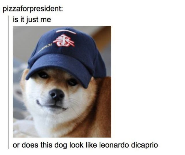 Dog - pizzaforpresident: is it just me or does this dog look like leonardo dicaprio