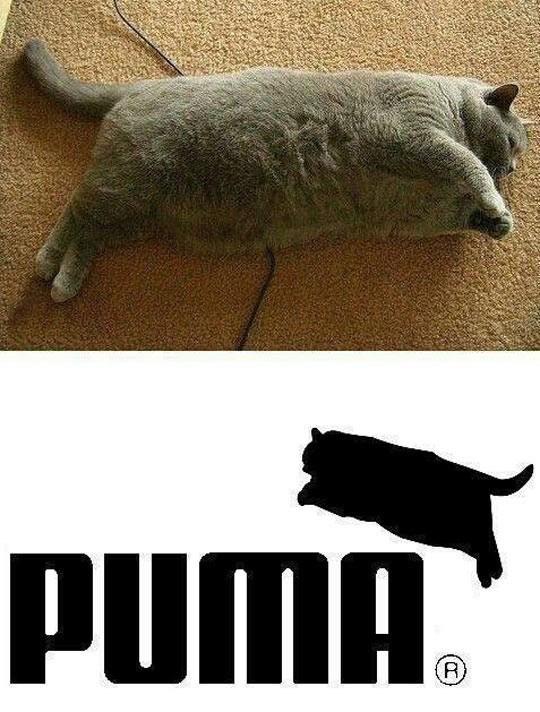 Snout - PUMA