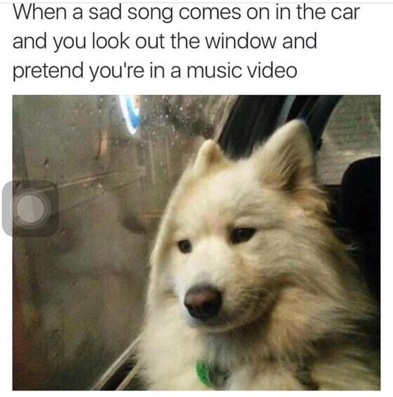 Mammal - When a sad song comes on in the car and you look out the window and pretend you're in a music video
