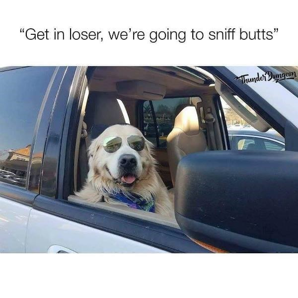 """Dog - """"Get in loser, we're going to sniff butts"""" hunderDungeon"""