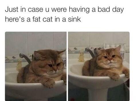 Cat - Just in case u were having a bad day here's a fat cat in a sink