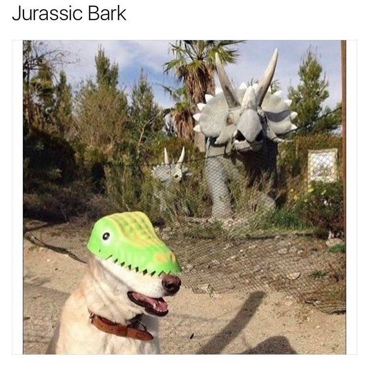 dogs,Memes,dinosaurs