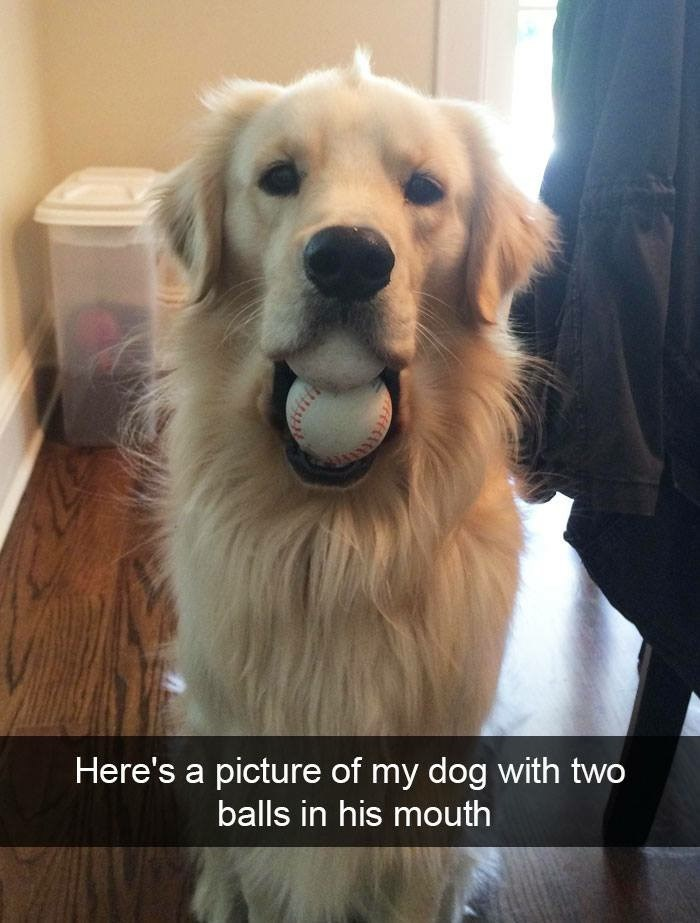 Dog - Here's a picture of my dog with two balls in his mouth
